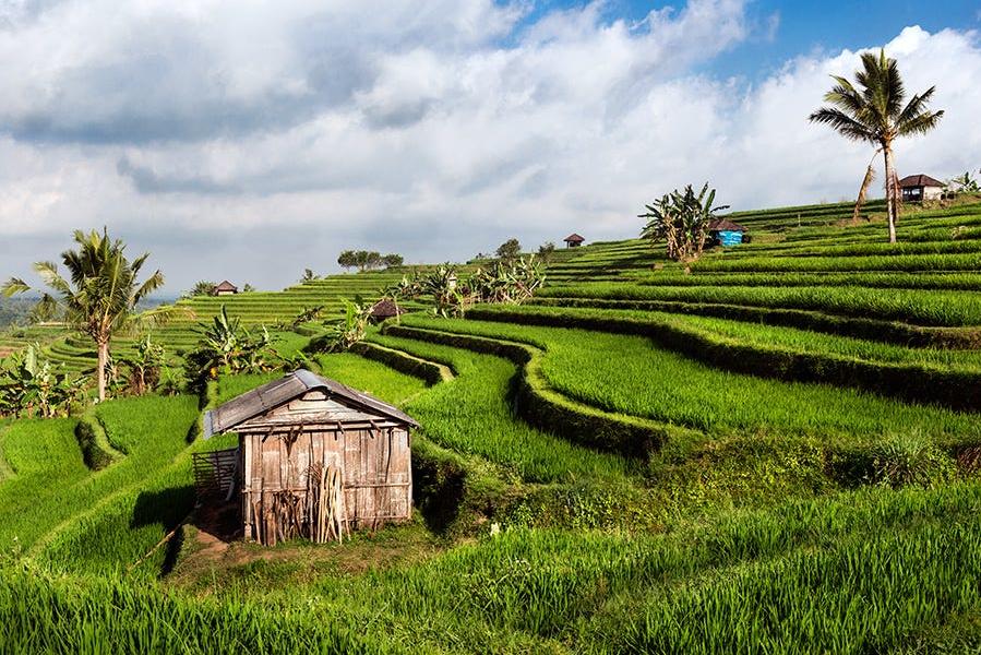 Bali Day Tour to Jatiluwih Rice Hills & Bali Temples