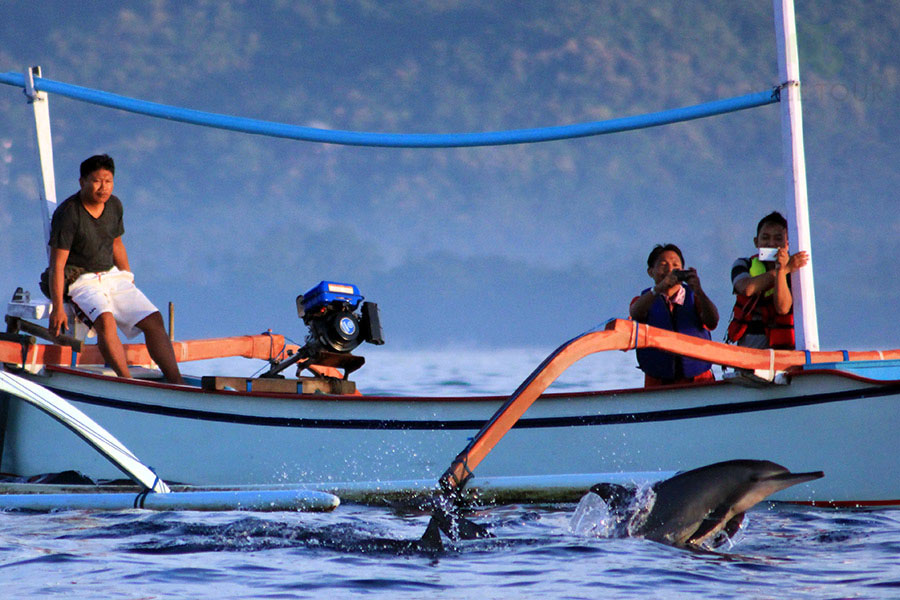 One Day Tour Bali to see Dolphins, Bali Temples Tours and Hot Springs