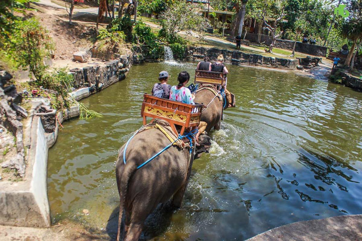 Bali Elephant Ride Activities