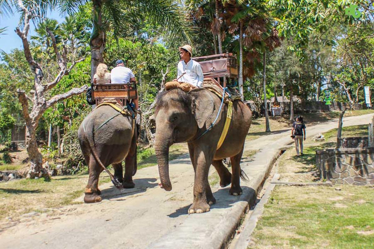Elephant Ride at Carang Sari