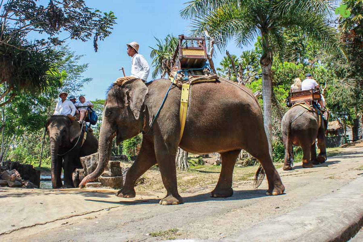 Full Day Bali Elephant Ride