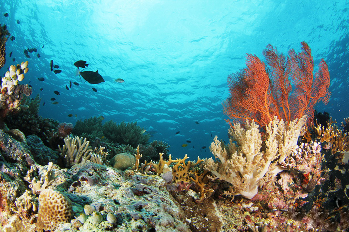 Menjangan Island Snorkeling Point