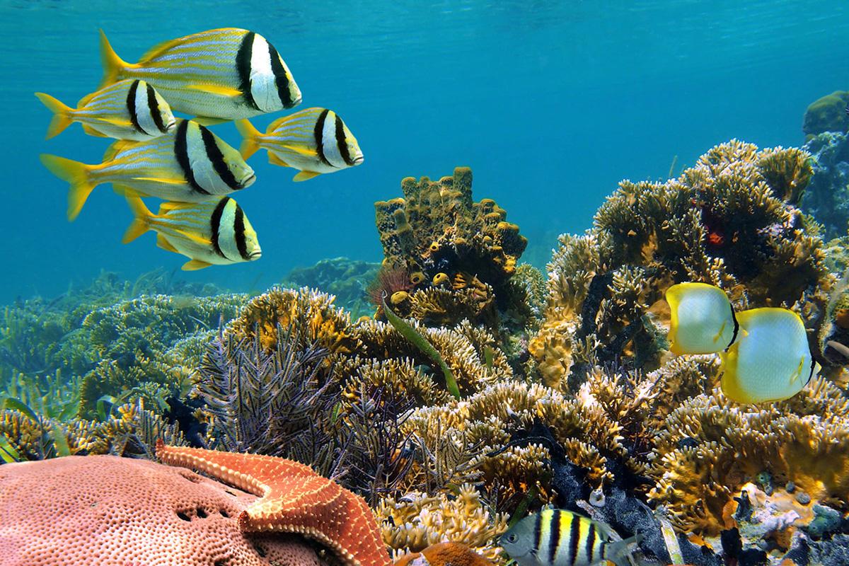 Menjangan Island Snorkeling