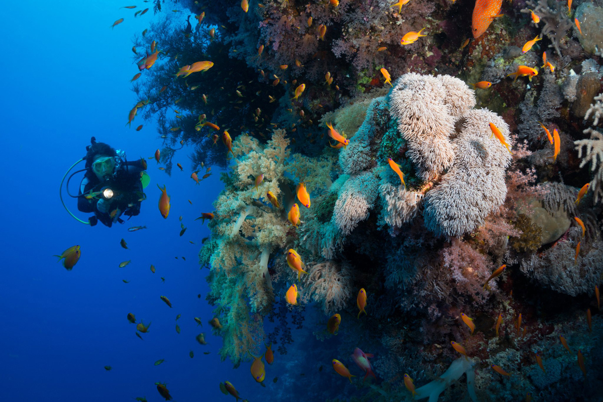 Diving in Tulamben | Bali Day Trip | US Liberty Shipwreck Point