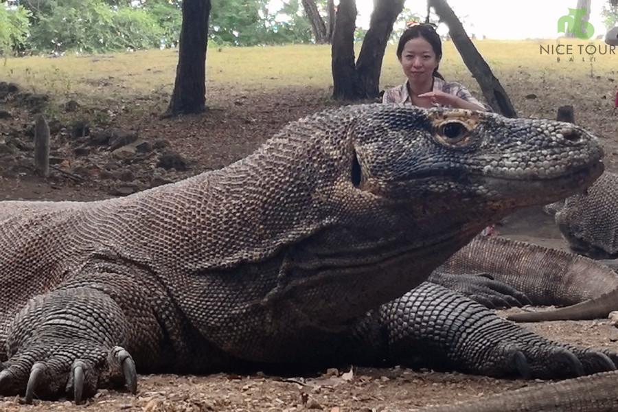 Komodo Island Tour from Bali | Searching for Komodo Dragons!