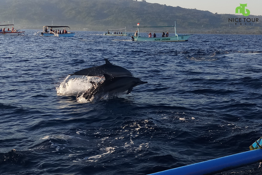 Lovina Dolphin Watching Price at USD 10 per person [Hot Bali Deal]